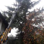 gru cingolata 525 servizio gru per taglio alberi secolari
